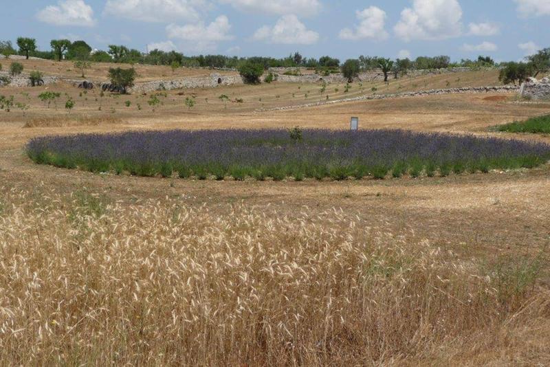 Giardini di Pomona: alla ricerca del grano perduto