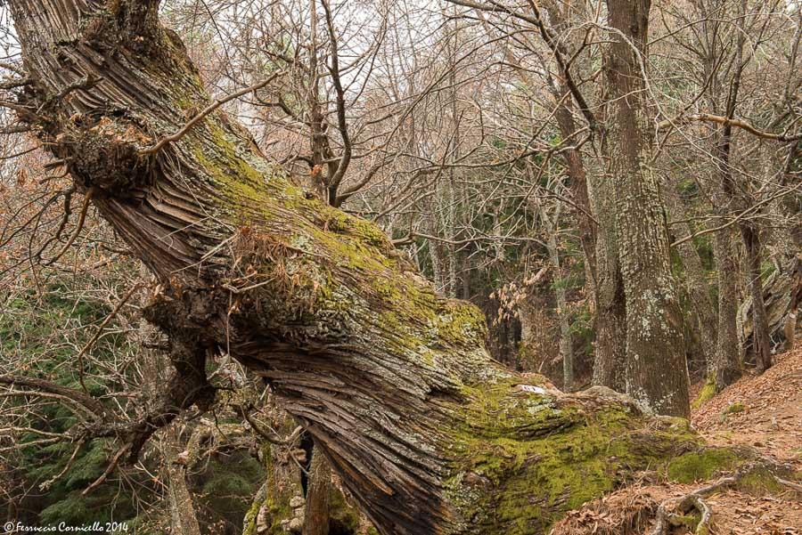 I segreti del bosco vecchio. Viaggio nella poetica bellezza di Cozzo del Pesco