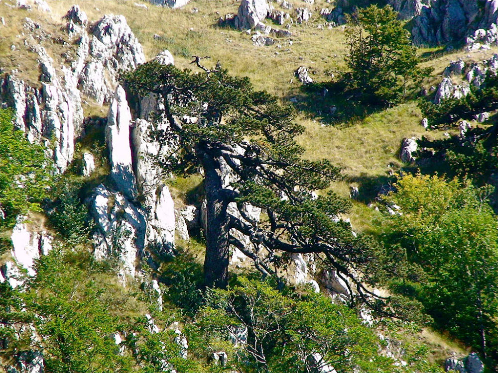 Il Parco Nazionale del Pollino entra nel patrimonio UNESCO attraverso la Rete Mondiale dei Geoparchi