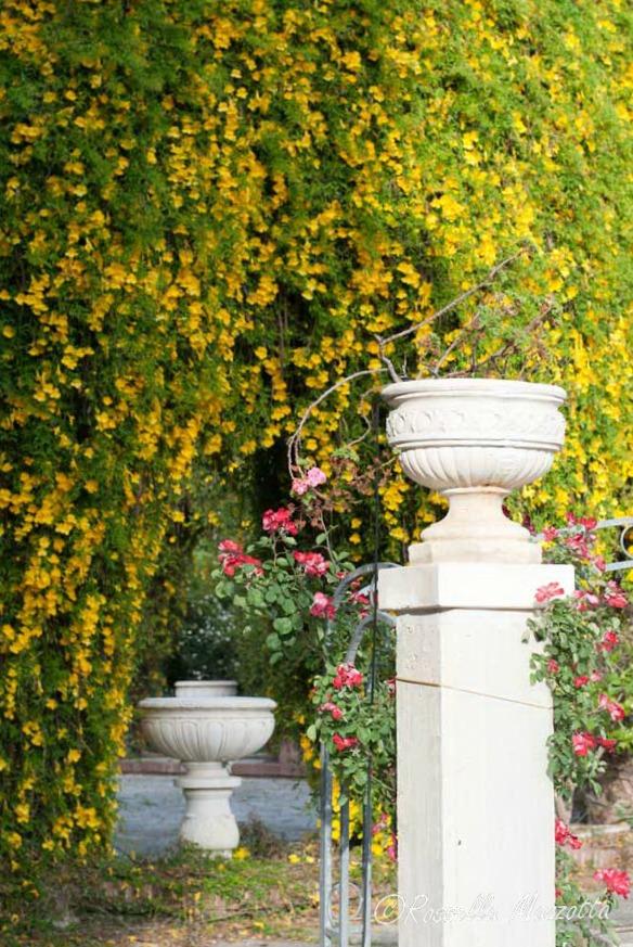 Il Roseto di Villa Larocca: a Bari, una magia di colori e profumi
