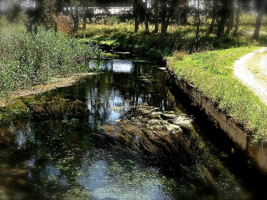 Il tarantino Galeso: il fiume che fece sognare i poeti, oggi in abbandono