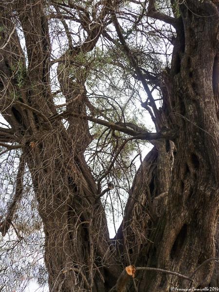 Nella Calabria jonica cosentina: Amarelli e U Tataranni