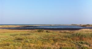 Alla scoperta dell'oasi Salina di Punta della Contessa in compagnia di Martine Balanza, maestra di Tai Chi