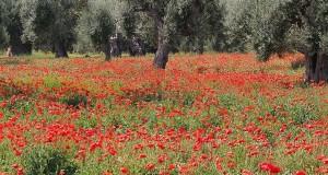 Puglia capitale delle vacanze felici. Lo rivela uno studio milanese sui Big Data della Rete