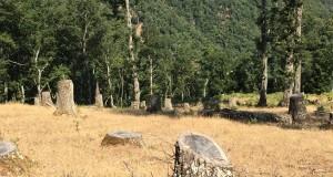 Assalto alla montagna. Sulla Sila Greca abbattuti abusivamente centinaia di alberi