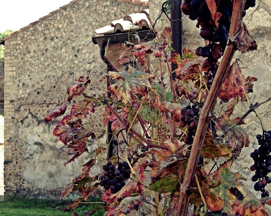 Colori autunnali in una delle ville di Boscoreale (Na) - Ph. Carlo Mirante | CCBY2.0