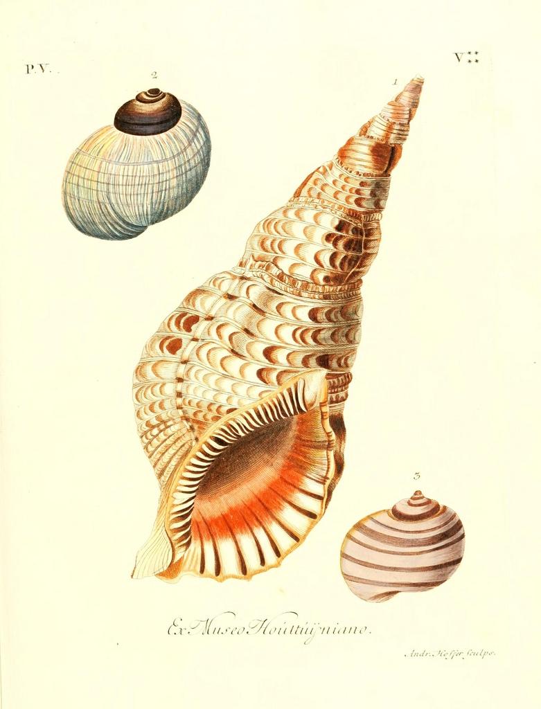Ph. Biodiversity Heritage Library | CCBY2.0