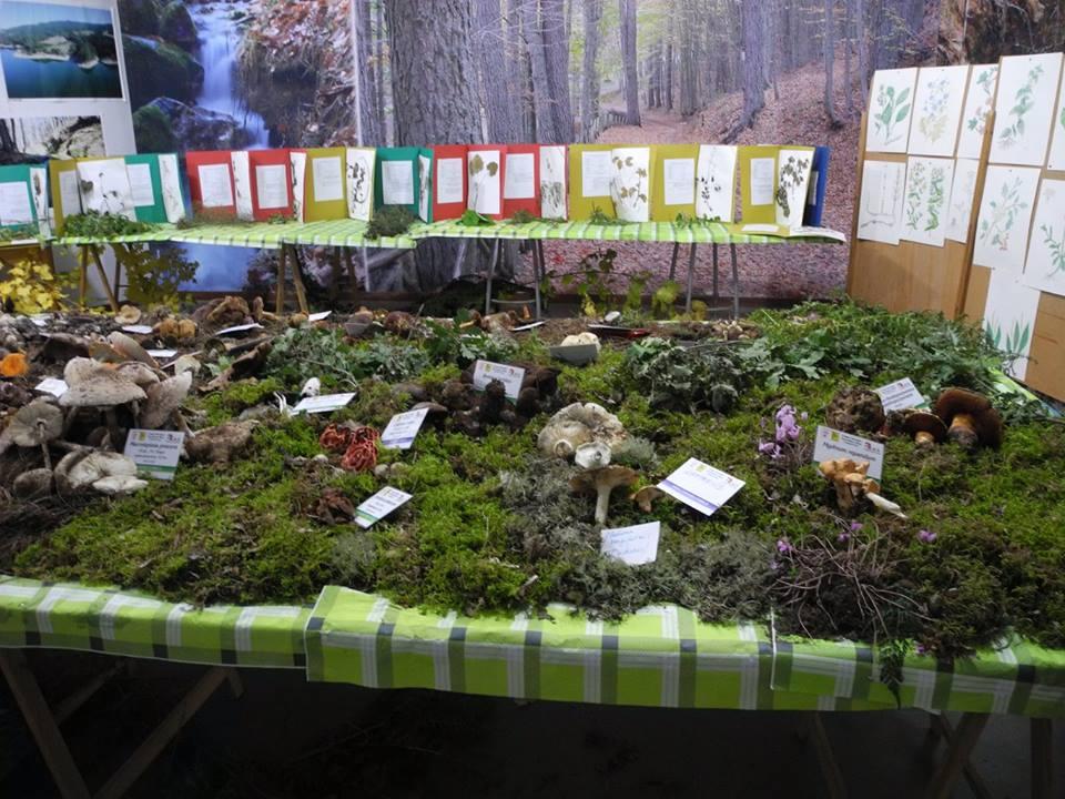 Uno scorcio della Mostra Micologica allestita dal Gruppo Naturalistico Micologico Silano, Camigliatello Silano (Cs) - Ph. Anna L. Mattesini