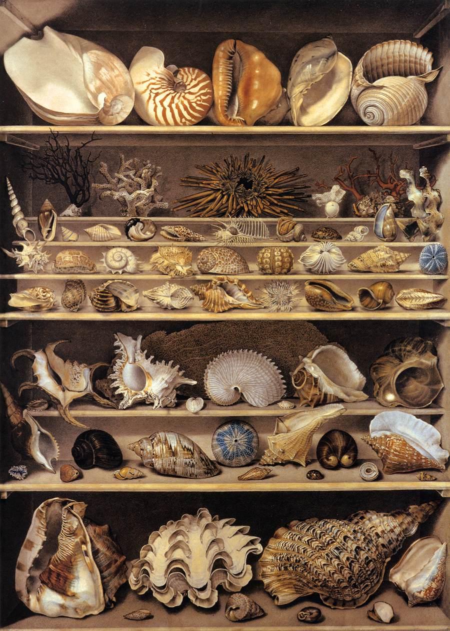 Alexandre-Isidore Leroy De Barde, La collezione di conchiglie, XVIII sec.