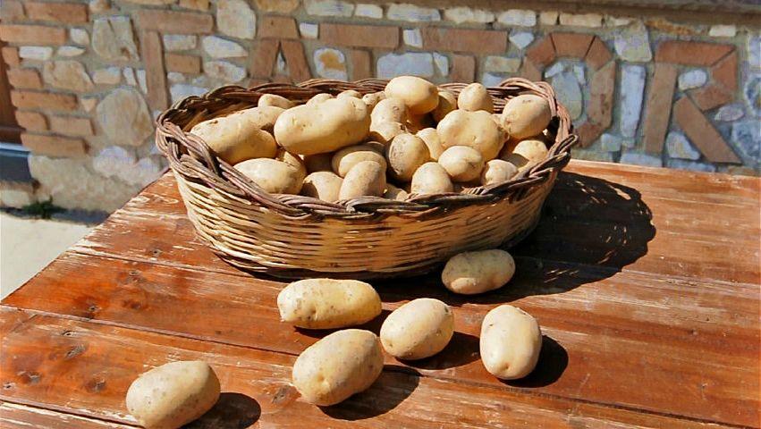 Cesta di patate silane - Ph. © Anna Laura Mattesini