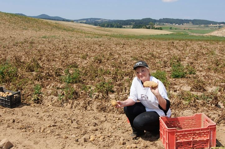 Anna Laura in un campo di patate silane durante la raccolta