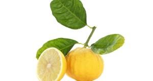 Effetti benefici del bergamotto: una nuova ricerca lo ritiene efficace anche contro patologie del fegato