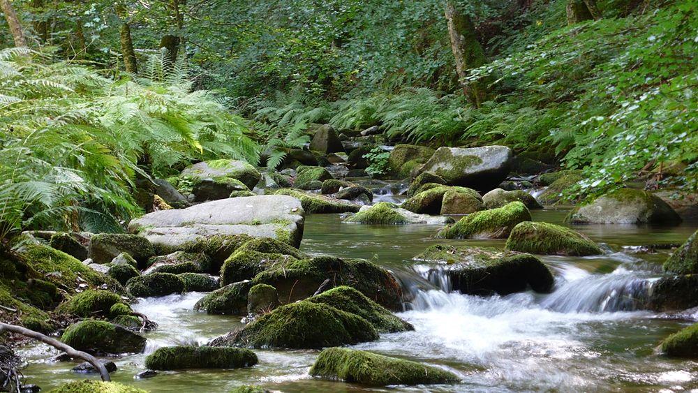 Calabria - Torrente all'interno della foresta della Fossiata, Parco Nazionale della Sila (Cs) - Ph. © Andrea Martini di Cigala