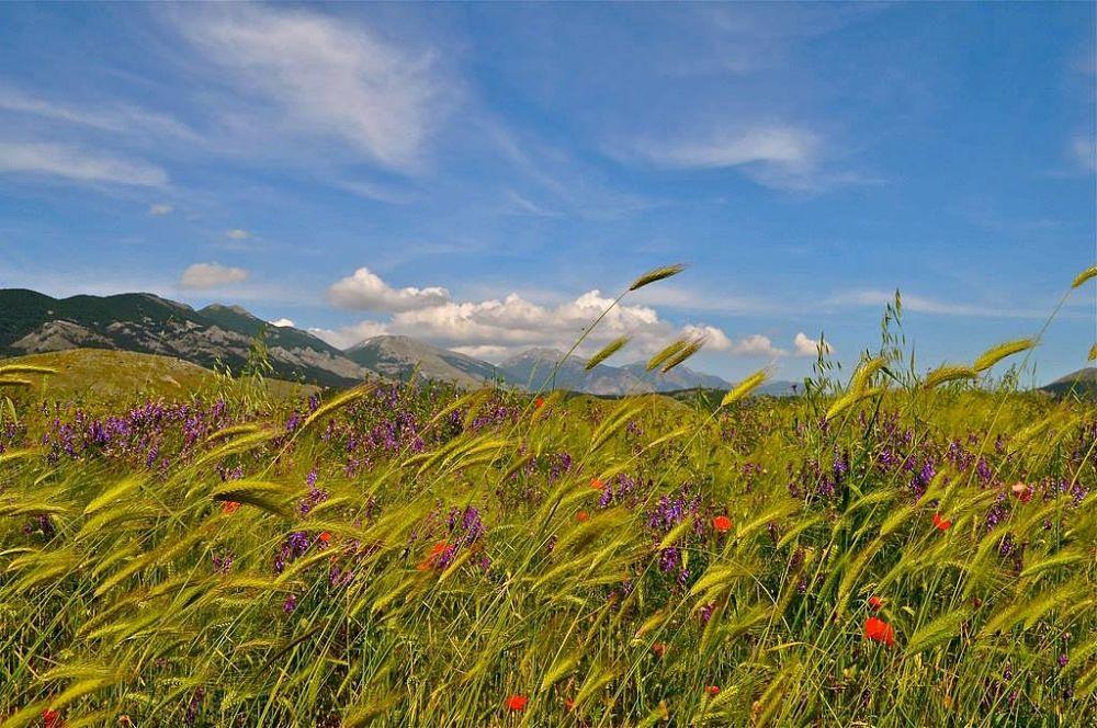 Calabria - Flora selvatica nel Parco Nazionale del Pollino – Ph. © Stefano Contin