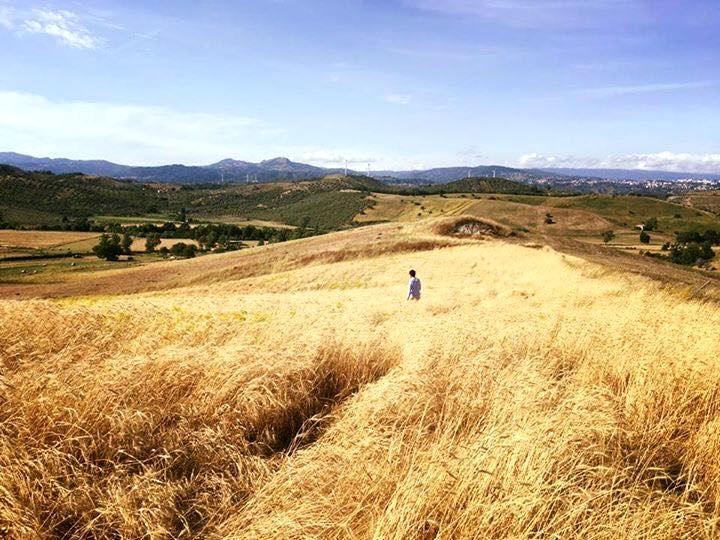 Calabria - Stefano Caccavari, founder di Mulinum, fra le spighe dei suoi campi di grani antichi, San Floro (Cz)