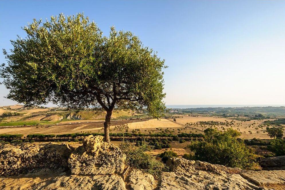 Sicilia - Scorcio della Valle dei Templi di Agrigento - Ph. Jos Dielis   CCBY2.0