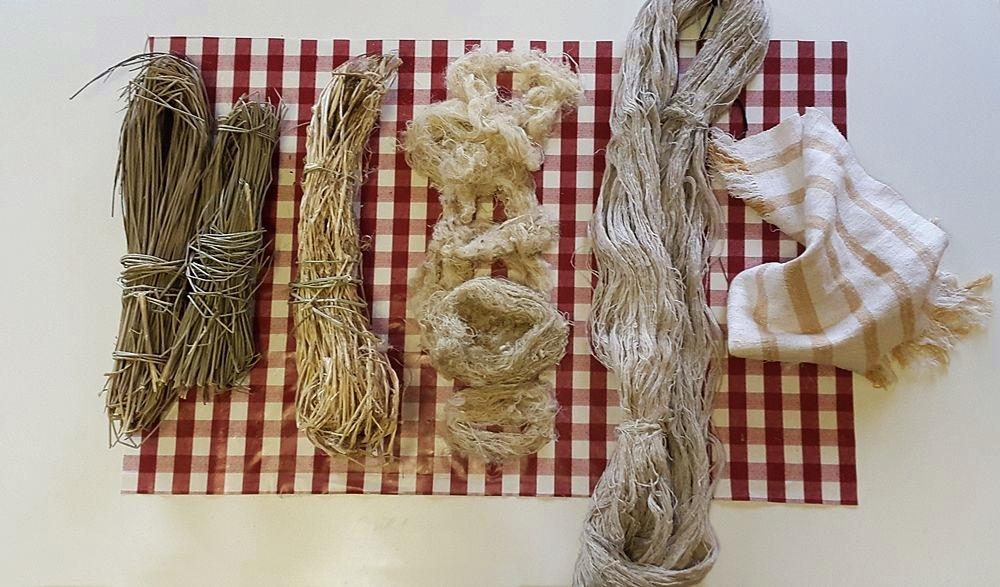 La fibra di ginestra nelle varie fasi di lavorazione, dalla pianta al tessuto finale - Ph. © Angela Rubino
