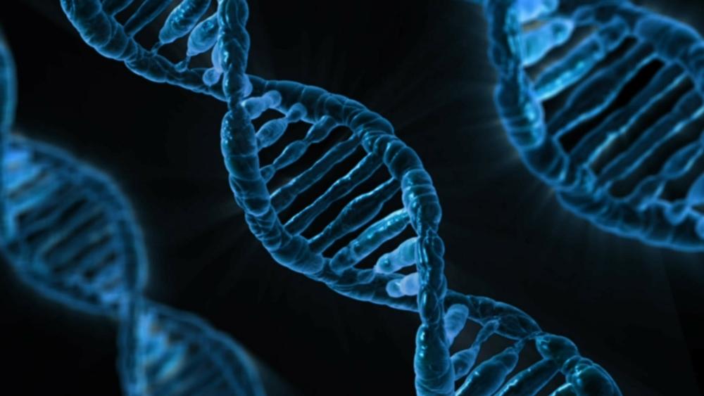 Sequenze di DNA
