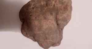 Lucania, terra di tartufi pregiati: ritrovato nel materano un esemplare di sei etti