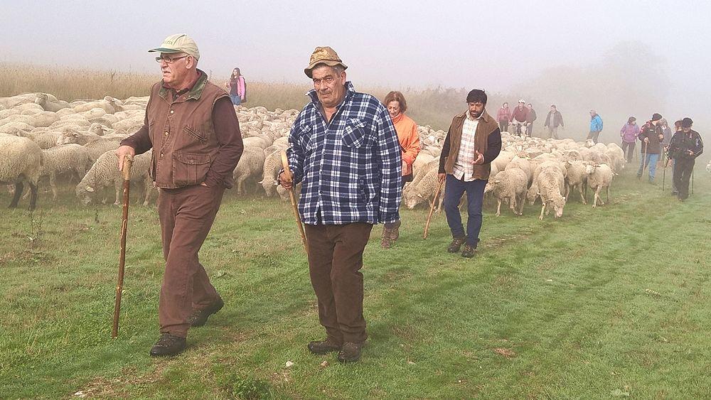 Escursione con il pastore_opt