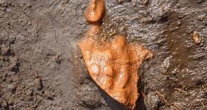 Sila archeologica: alla scoperta del volto inedito dell'altopiano calabrese