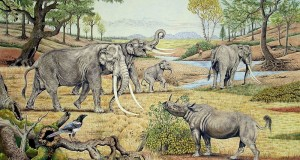 Un elefante preistorico riemerge dai fondali di un lago della Sila Grande