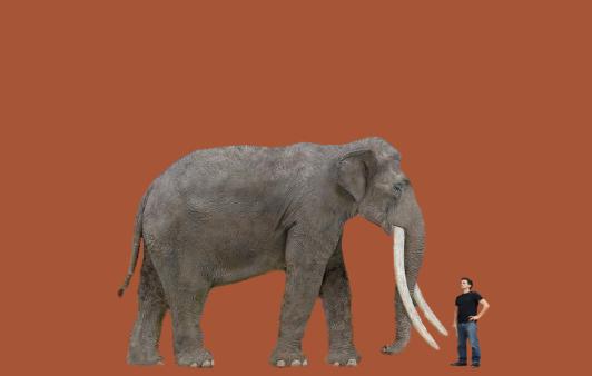 elephas_man_2