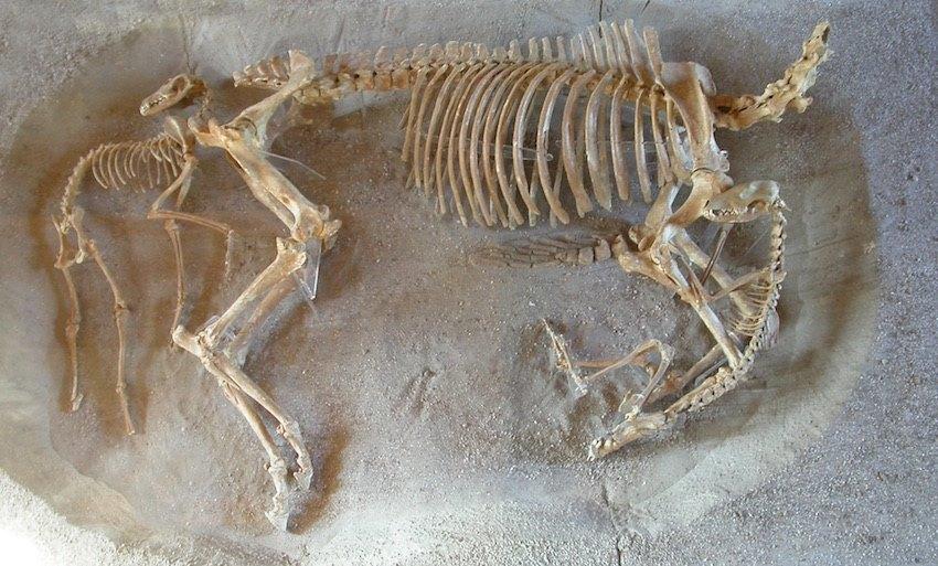 scheletri_cavallo_cani