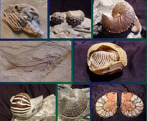 Altri fossili delle collezioni del Prof. Nicola Cardaci, rese disponibili per la nascita del nuovo museo a Sellia (Cz)