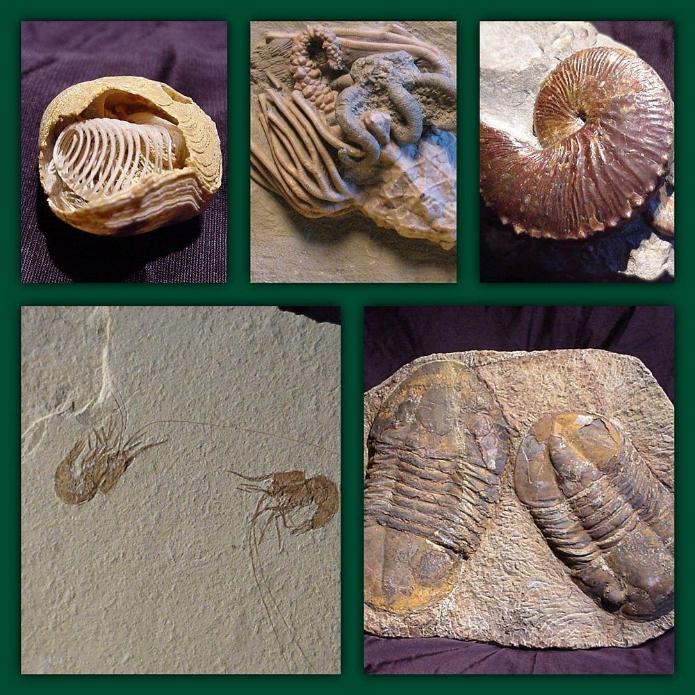 Alcuni fossili della Collezione Cardaci, Sellia (Cz)