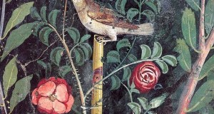La rosa antica di Pompei rivive grazie a un progetto di archeobotanica