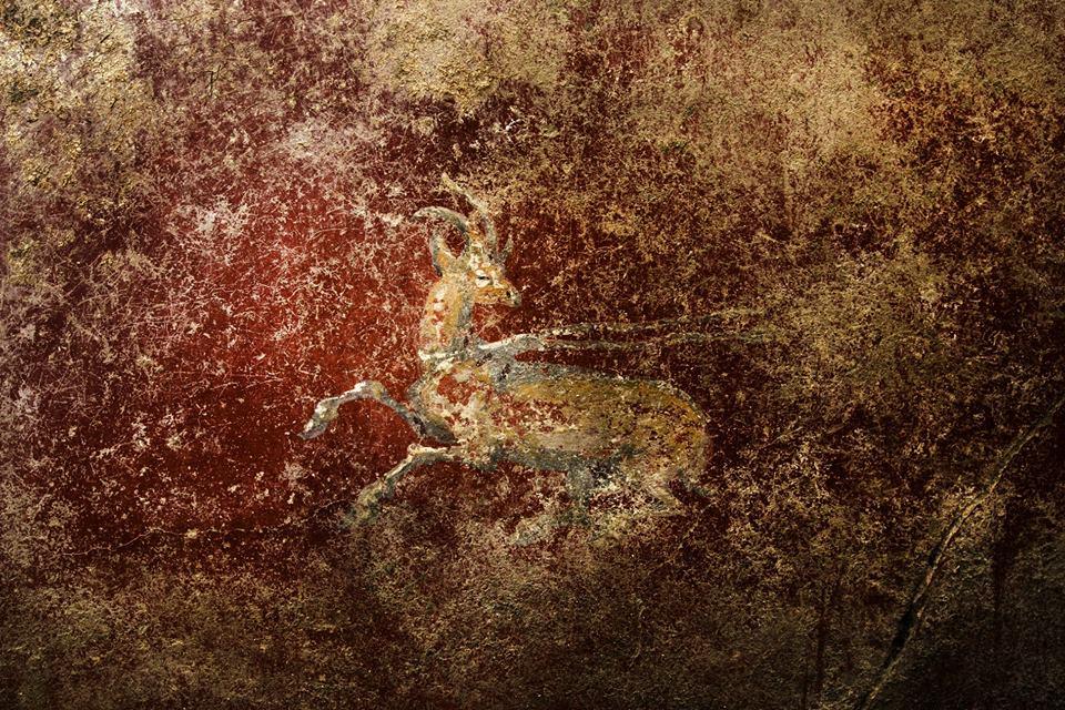 Affresco con capriolo, dalla Domus dei delfini, Pompei - Image by Parco Archeologico di Pompei