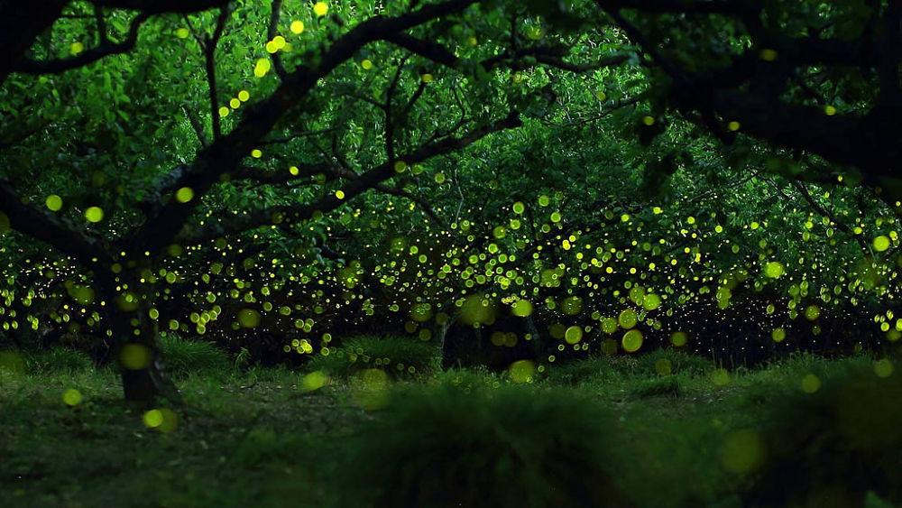 Lucciole nella foresta - Ph. Dante Aguiar