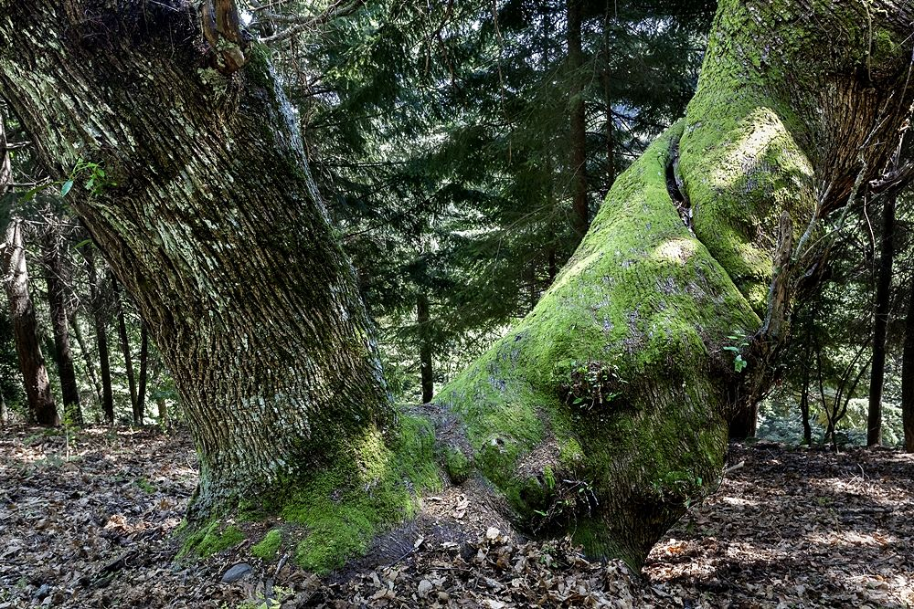 Scorcio del Bosco di Gallopane, nella Sila Grande - Image by Parco Nazionale della Sila