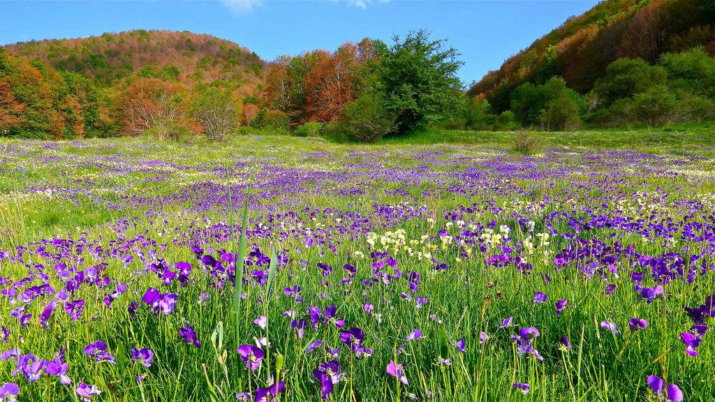 Fioritura primaverile a Masistro, Saracena (Cs), Parco Nazionale del Pollino - Ph. © Stefano Contin