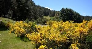 Calabria: storia del bosco e dei suoi prodotti. La Sila, antica regina delle selve