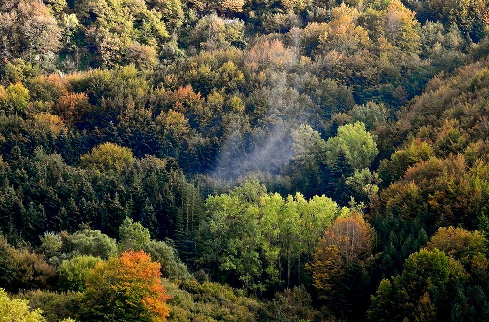 Fumo fra gli alberi di Campotenese, Parco Nazionale del Pollino - Ph. © Stefano Contin