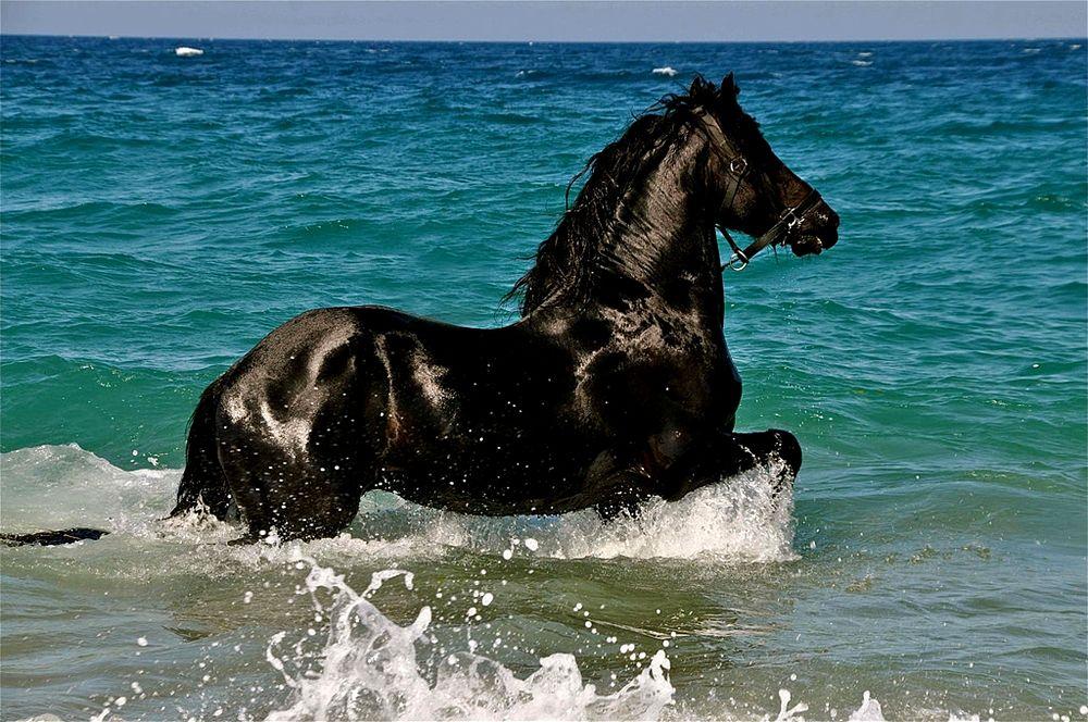 Cavallo lungo la marina di Schiavonea (Cosenza) - Ph. © Stefano Contin
