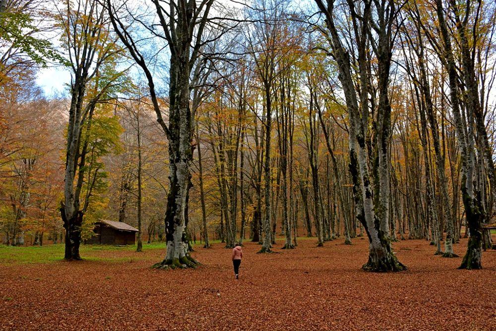 Monica, Parco Nazionale del Pollino - Ph. © Stefano Contin