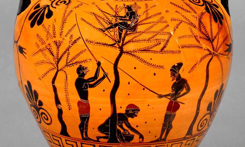 Raccolta delle olive in un'anfora attica del VI sec. a.C.