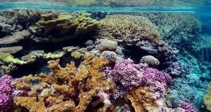 Scoperta in Puglia una barriera corallina: è la prima rinvenuta nel Mediterraneo