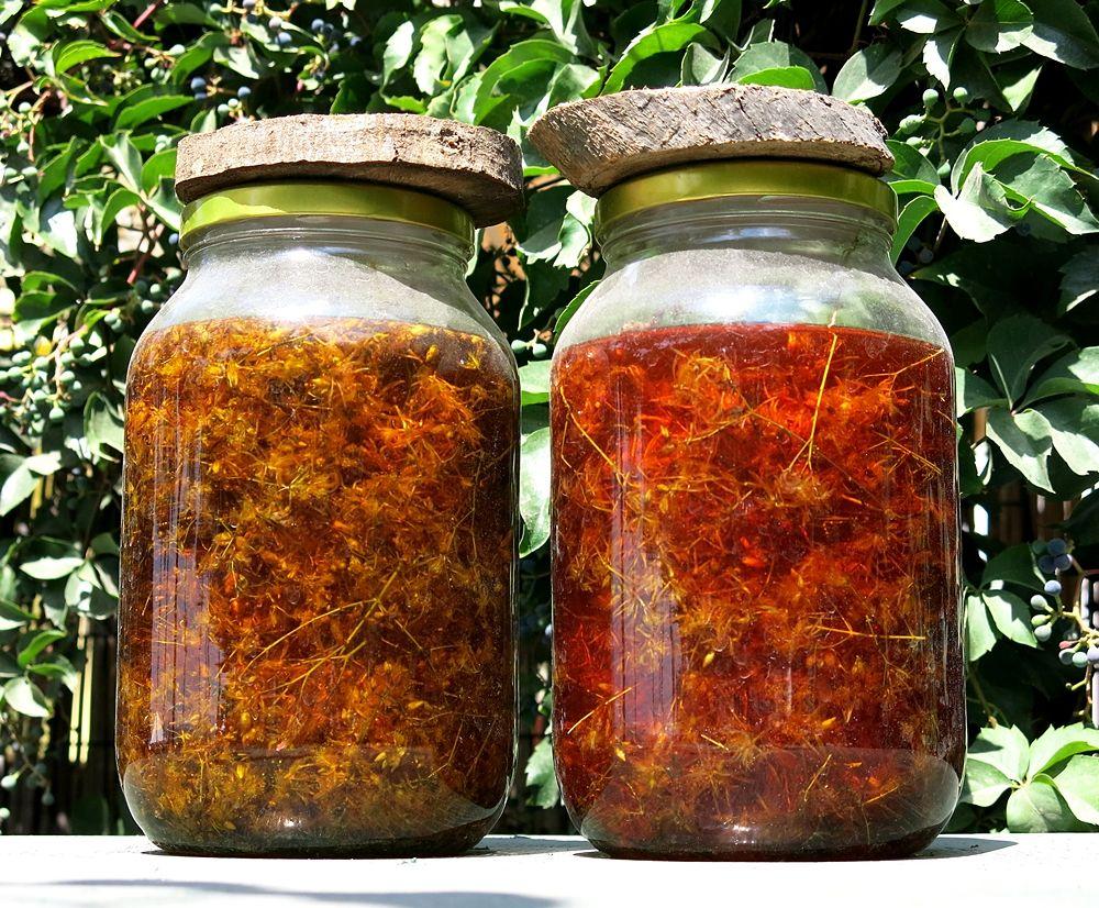 Olio di iperico (Oleum hypericon) in preparazione - Ph. Holger Casselmann