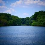 Foce del fiume Crati: raro esempio di foresta planiziale naturale del Mediterraneo