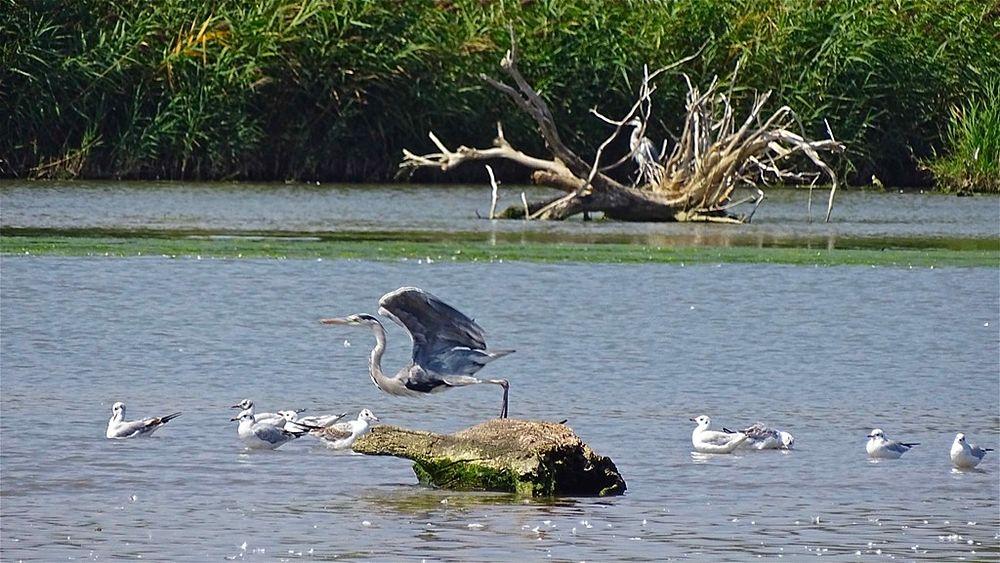 Uccelli acquatici nella Riserva Naturale Regionale della Foce del fiume Crati - Ph. © Stefano Contin