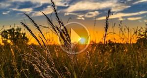 Madre Nostra. L'agricoltura come mezzo di riscatto nel documentario di Lorenzo Scaraggi