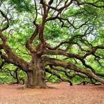 Individuata in Calabria una delle 5 querce più antiche del pianeta. Potrebbe essere la più vecchia