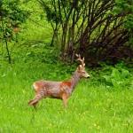 Parco Nazionale del Pollino: uno scrigno di biodiversità faunistica