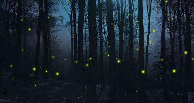 Bosco di Sant'Antuono: la verde oasi pugliese delle lucciole