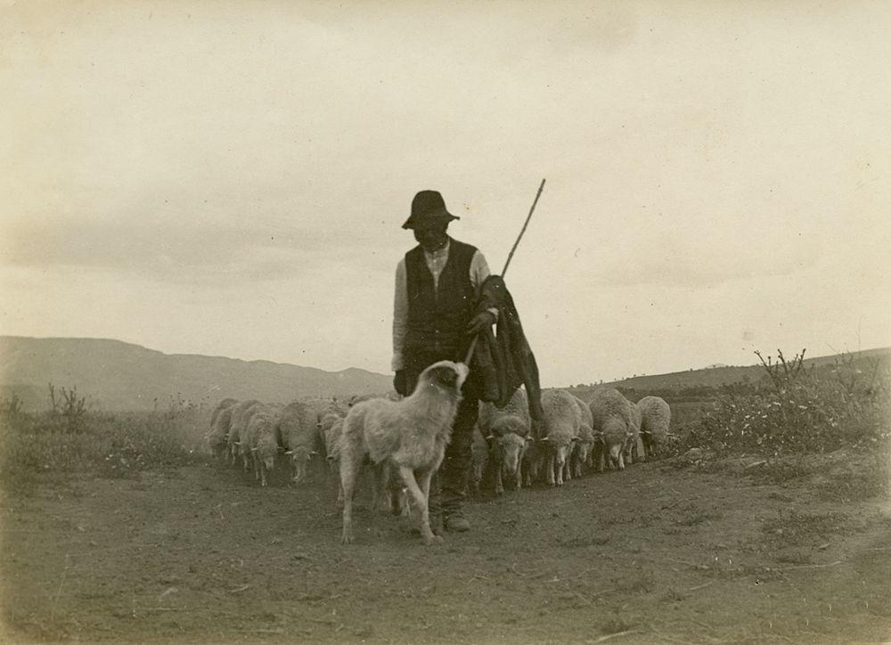 Laval Nugent, Pastore con gregge e cane, XIX-XX secolo - Coll. Diciocia