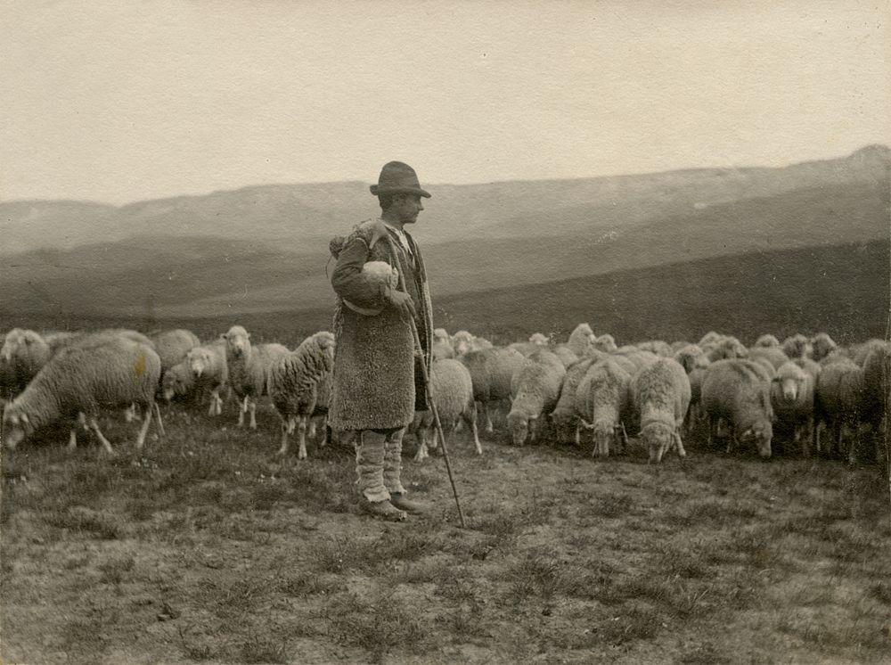 Laval Nugent, Pastore con gregge al pascolo, Lucania, XIX-XX secolo - Coll. Diciocia